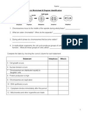 Mitosis Worksheet And Diagram Identification Mitosis Cell Biology