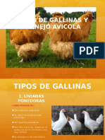 TIPOS DE GALLINA Y MANEJO AVICOLA
