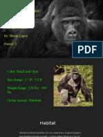 bryan lopez endagered gorillas