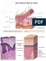 HISTOLOGY STRUCTURE OF SKIN.pptx