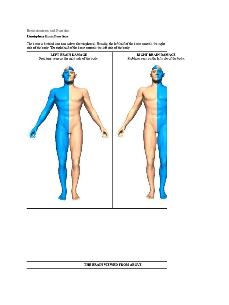 Brain Anatomy and Function | Frontal Lobe | Perception