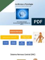 1 - Estrutura do Sistema Nervoso.pdf