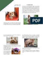 Imprimir pagina1