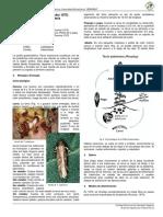 FICHA_TECNICA_Tecia_solanivora.pdf