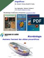 Anatomia funcional das células p