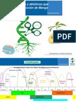 Factores bioticos y abióticos que afectan la producción del mango