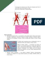 2.OS MÚSCULOS (1).pdf