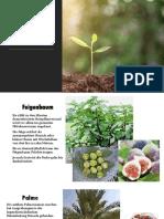 Pflanzen in der Bibel