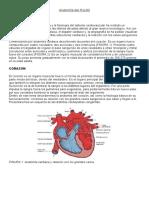 Anatomía del PULSO