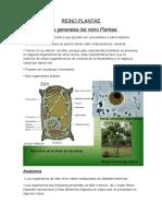 Características generales del reino Plantae