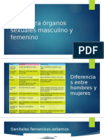estructura organos sexuales masculino femenino