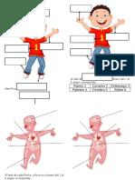 Identifica las partes del cuerpo
