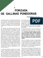 HAGA UNA. PELECHA FORZADA. DE GALLINAS PONEDORAS