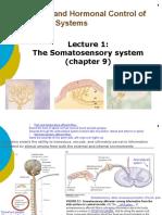 1-Somatosensory system_Students.pptx