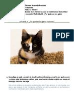 ¿Por qué son los gatos tricolores