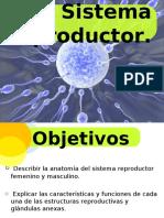 Aparato_Reproductor