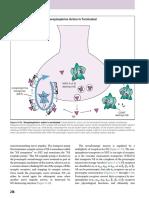 stahl' essential psychopharmacology 276.pdf