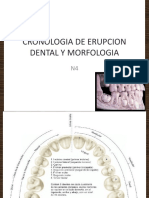 CRONOLOGIA DE ERUPCION DENTAL Y MORFOLOGIA.pptx
