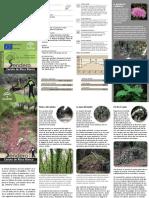 215_CanutodeRiscoBlanco.pdf