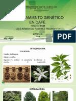 Mejoramiento genético en café