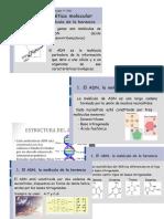 ESTRUCTURA DEL ADN -  NUCLEOTIDOS