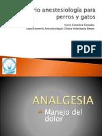 Analgesia M.V. Carla González 2013 presentacion ppt