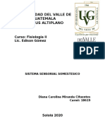 SISTEMA SENSORIAL SOMESTESICO.docx