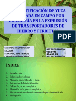 Biofortificación de la yuca cultivada en campo mediante corrección.pptx