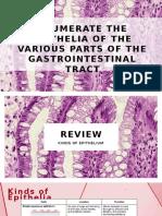 Gastrointestinal Epithelia