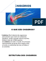 CNIDÁRIOS (3)