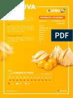 ficha_uchuva_final (1).pdf