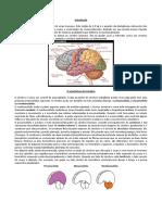 Resumo anatômico e fisiológico do cérebro (National Institute of Health)