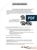 dokumen.tips_chiste-si-fistule-cervicale