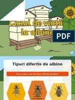 Totul despre ciclul de viata al unei albine - Prezentare PowerPoint.ppt