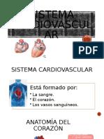 sistema cardiovascular imprimir