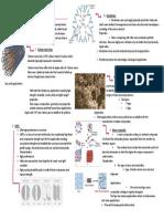 bcm nano materials.pdf