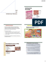 Infecciones en la piel y tejidos blandos de origen bacteriano