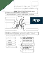 prueba. s. respiratorio 5_.docx