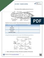 paramecium_niche_activity.pdf