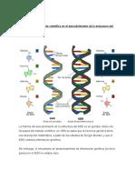 Ej real método científico en el descubrimiento de la estructura del ADN