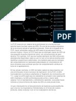 La PCR (reacción en cadena de la polimerasa)