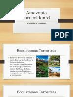 Amazonía Noroccidental.pptx