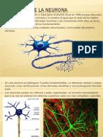 fisiologadelaneuronapresentacion-101006155916-phpapp02.pdf
