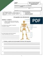 Guía de aprendiizaje N°  5 Huesos y articulaciones
