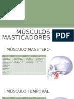 6. Musculos masticatorios