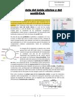 Tema 2 Metabolismo.pdf