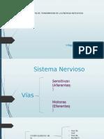 8. Vías de transmisión de la energia nerviosa.pptx
