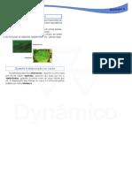 Nervuras-das-plantas-e-Disposição-das-folhas-no-caule.pdf