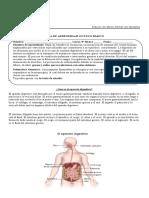 guia sistema digestivo 8vo básico