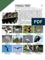 G Aves del humeda Itzata (Cordoba). Varios